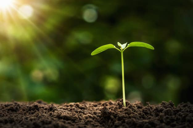 Crecimiento de la gracia en nosotros | Octavius Winslow