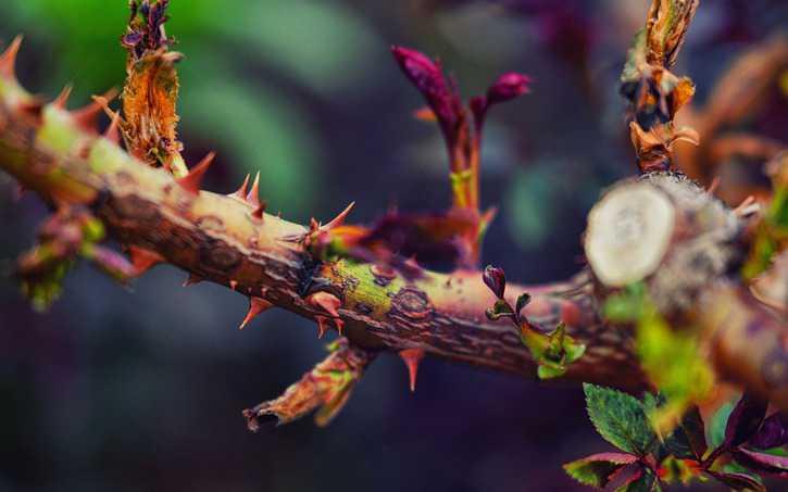 La espina en la carne enviada por Dios | Octavius Winslow